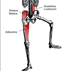 Muscles stabilising during a shin block