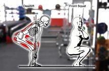 Deadlift - hip dominant lift