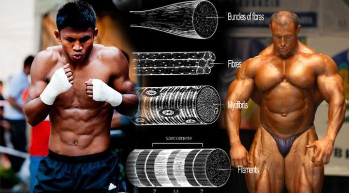 競技選手と筋肥大