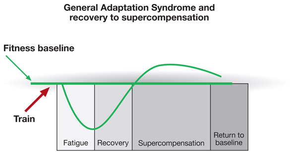 general adaptation syndrome and recovery