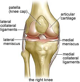 Right Knee Joint