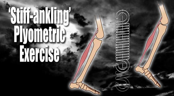 plyometrics Archives - Don Heatrick Muay Thai Performance