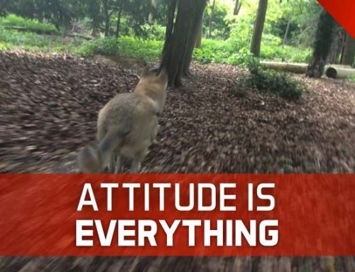 ATTITUDE IS EVERYTHING – AND NOT JUST IN MUAY THAI