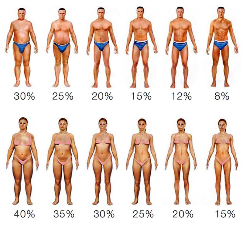 Visual representation of various body fat percentages